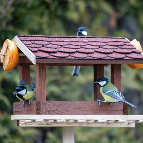 Food for birds all year round